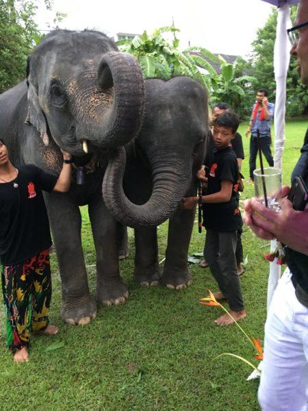 Elefanten im Blue Elephant